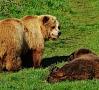 Ilustratīvs foto/ Foto: Pixabay Latvijā šajā pavasarī ir uzturējušies vismaz desmit lāči, tomēr eksperti uzskata, ka nevar runāt par to skaita pieaugumu.