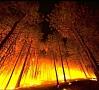 Foto: Pixabay|ASV Kalifornijas štatā uz austrumiem no Losandželosas plosās plašs savvaļas ugunsgrēks. Tas izpleties aptuveni 3000 hektāru platībā. Ar liesmām kalnainajā apvidū cīnās vairāk nekā 900 ugunsdzēsēji.