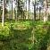 Meža atjaunošana, meža stādīšana Vītoli S SIA